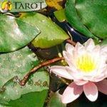 Curación mediante plantas chinas - Terapias Alternativas - Tarot10